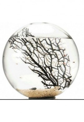 Bioglobe collection Gorgonia 30 cm