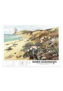 POSTER FRAPNA DUNES OCEANIQUES