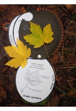 Eventail à empreintes feuilles d'arbres