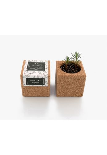 Grow Cube aimanté Sapin de Noël - boite verte