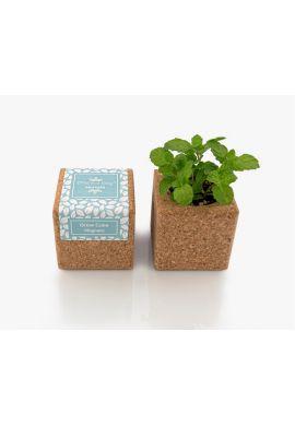 Grow Cube aimanté Menthe