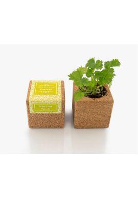 Grow Cube aimanté Coriandre