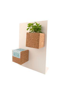 Grow Cube aimanté Basilic
