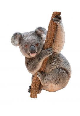 Puzzle I am koala