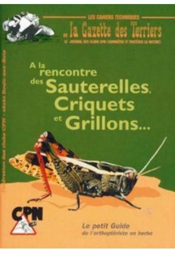 A la rencontre des sauterelles, grillons, criquets