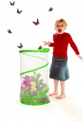 Kit d'élevage de papillons, modèle pavillon