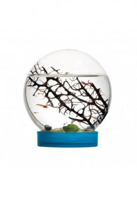 Bioglobe Evivo Ecosysteme marin avec crevettes
